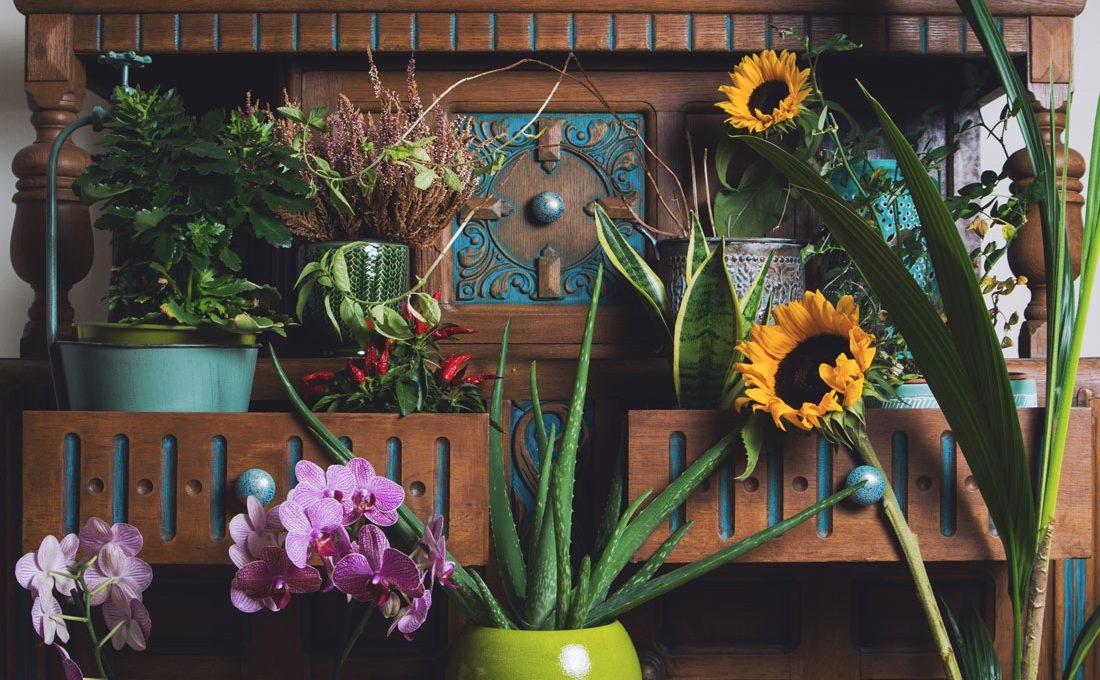 Przygarnij kwiatka!   Niezwykłe właściwości zwykłych roślin.