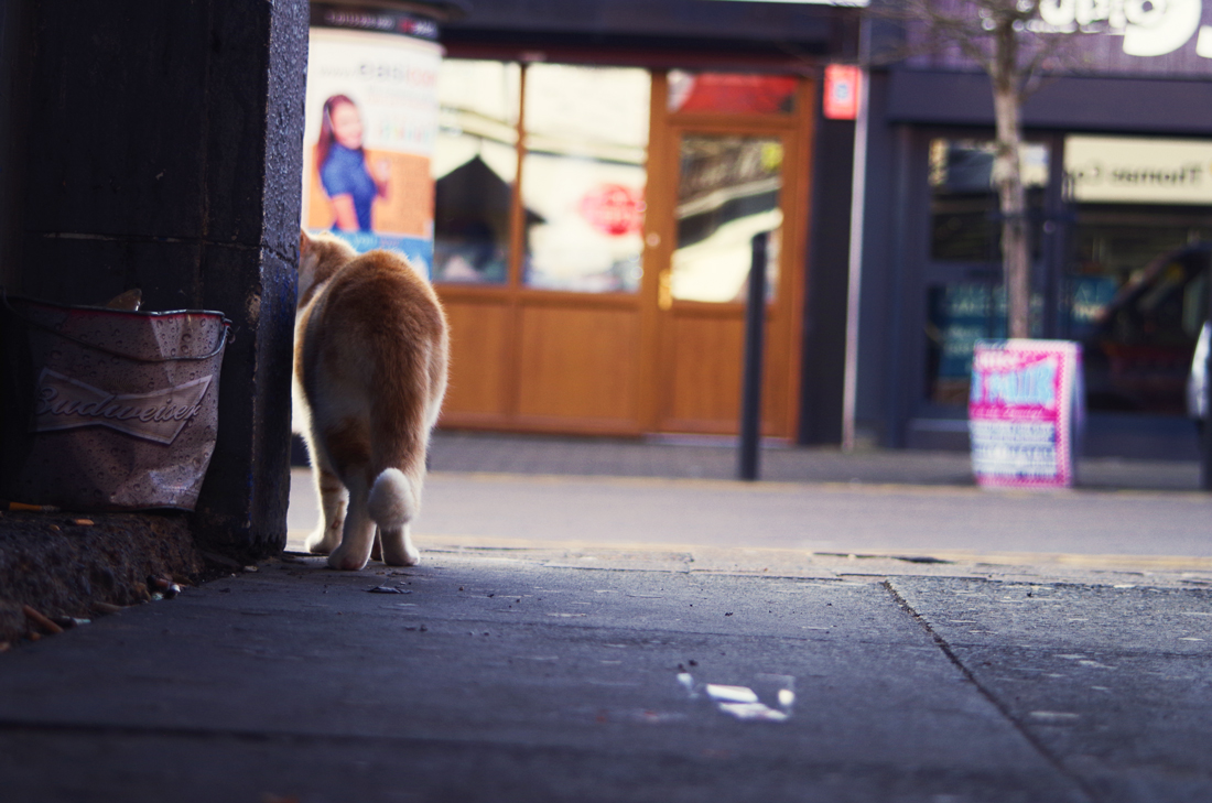 Kot wygląda za róg