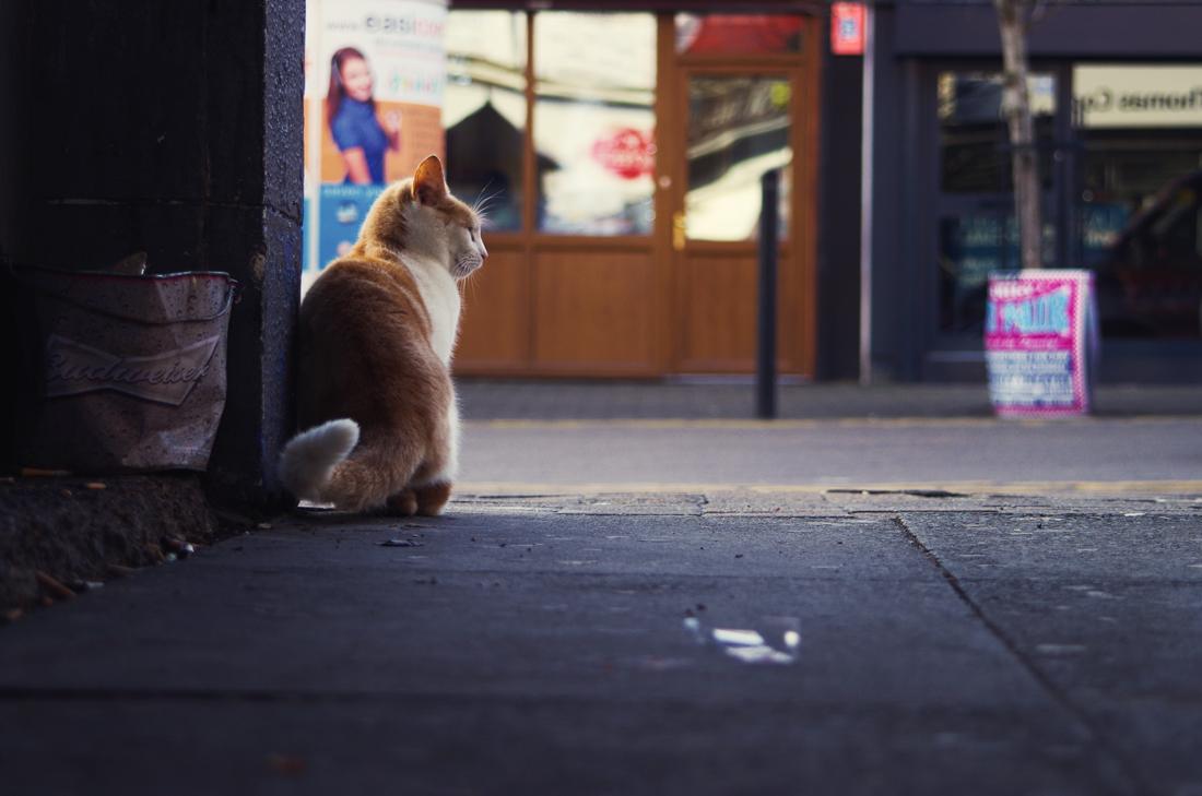 kot patrzy w dal z zadumą