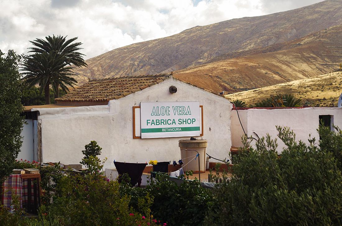 Fuerteventura - sklep aloesu w Betancuria