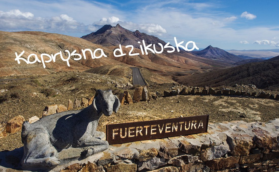 Wyspy Kanaryjskie – Dla kogo Fuerteventura?